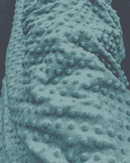 Tissu Minky Bleu Lagon